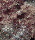 yazbeck-Hamour-scorpionfish-wetsuits